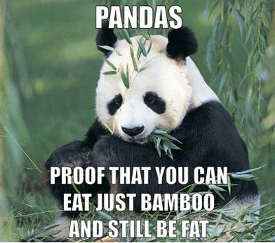 Funny panda memes - photo#23