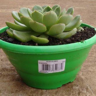 etiquetas_para_plantas