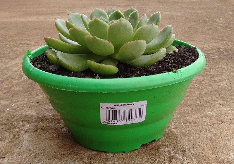 Etiquetas para vasos de flores e plantas promtec - Etiquetas para plantas ...