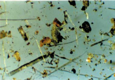 gotícula de água vista no microscópio